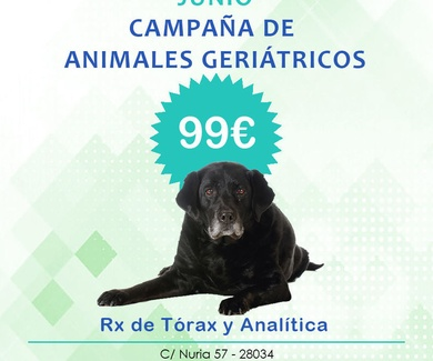 CAMPAÑA DE ANIMALES GERIÁTRICOS