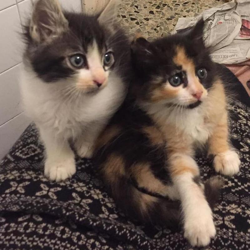 Adopciones felinas: Servicios de Centre Caní De Pedracastell