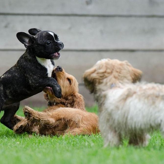 El cuidado canino según su tipo de pelo