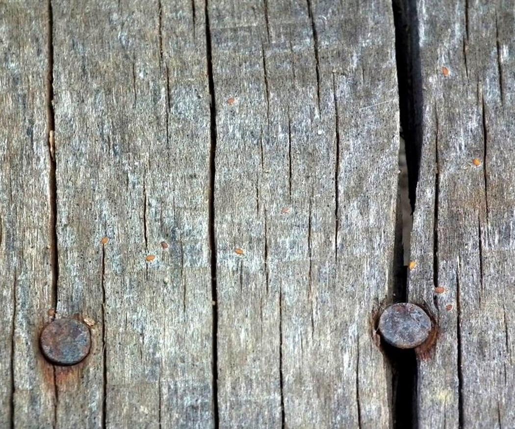 El moho, uno de los problemas de la madera