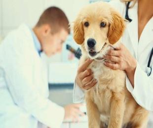 La identificación de tu perro gracias a un chip subcutáneo