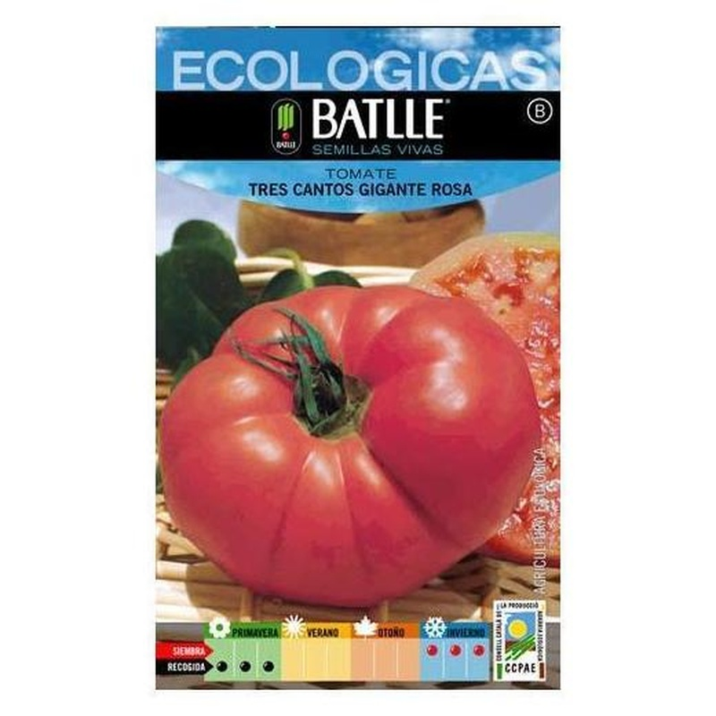 Semillas ecológicas de Tomate tres Cantos gigante rosa Ref.6