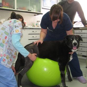Fisioterapia y rehabilitación canina y felina