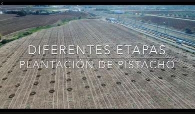vídeo etapas plantación pistacho