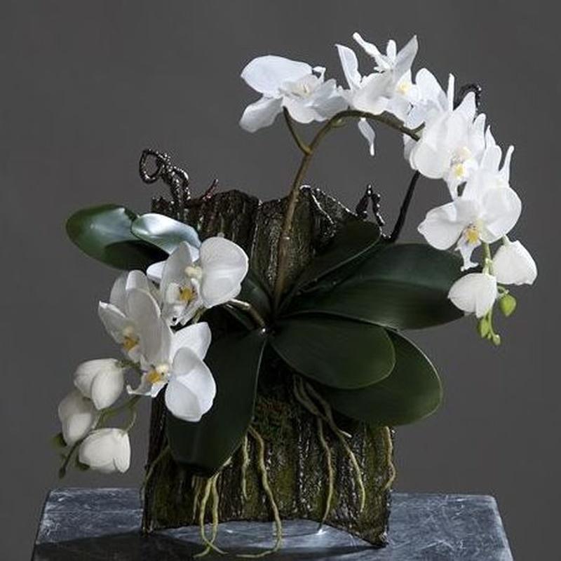 Orquídeas sobre corteza: CATÁLOGO de Fernando Gallego, S.C.P.