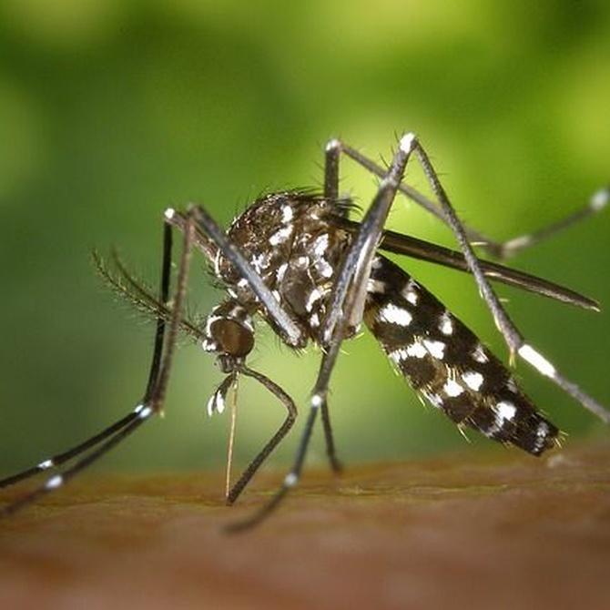 Historia de las mosquiteras