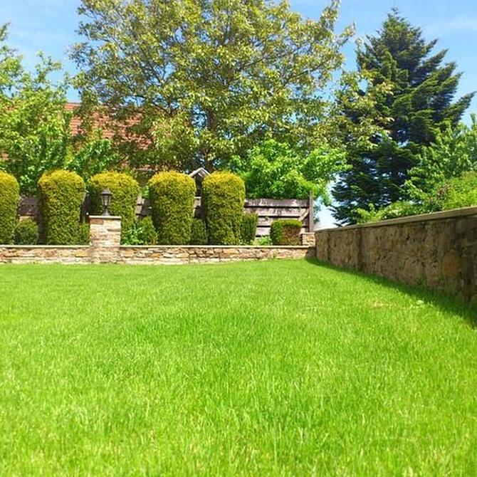 Cómo cuidar el jardín de las altas temperaturas
