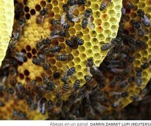 Nueve cosas que quizá no sabías de las abejas... y cinco que puedes hacer para protegerlas