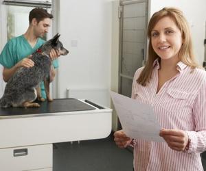 ¿Sabes qué vacunas se ponen a los perros?