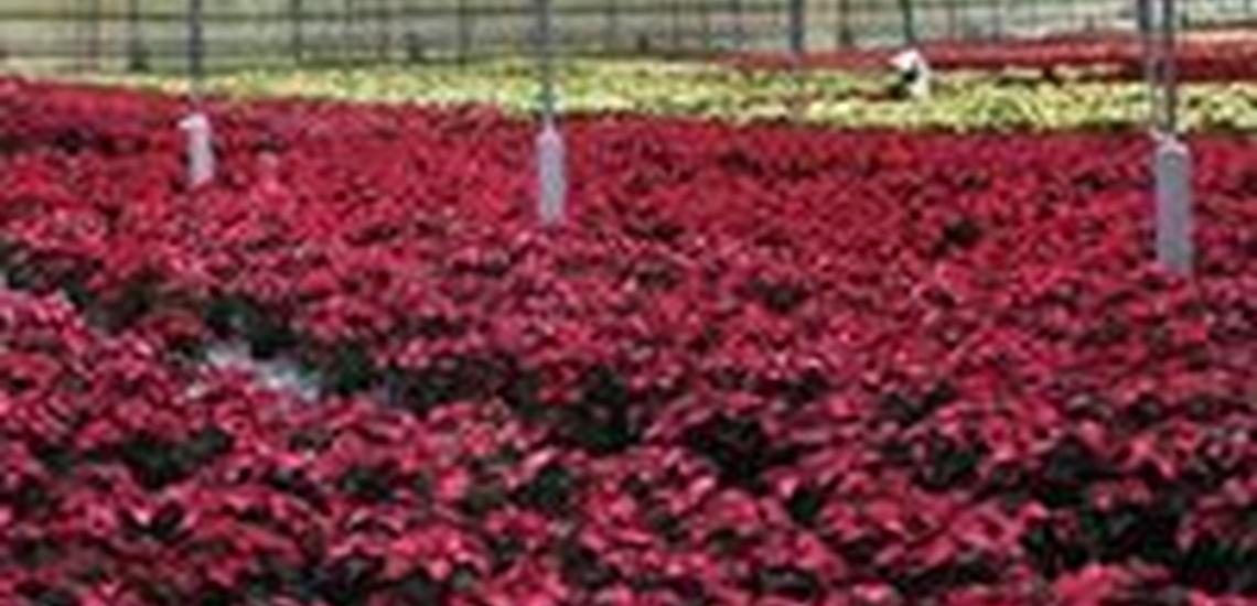 Vivero de plantas en Valencia y de flores para eventos