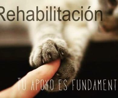 Curso teórico-práctico de rehabilitación de pequeños animales para ATV 2019