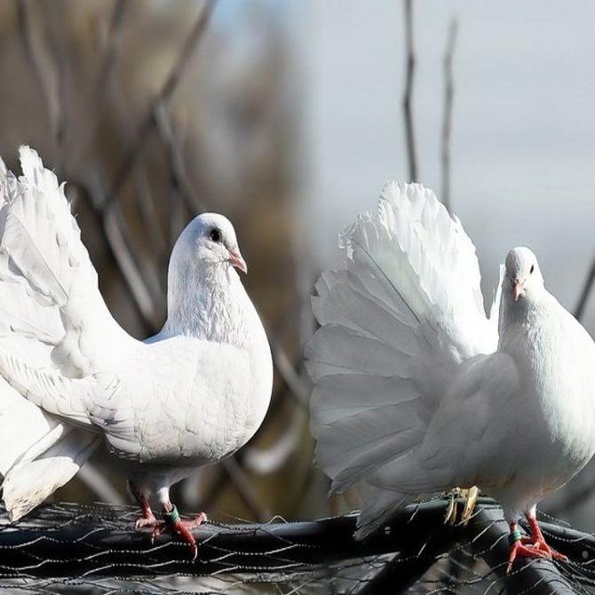 Por qué tu edificio necesita un sistema anti-aves