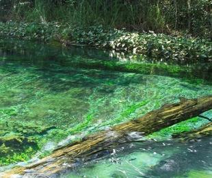 Legalización de aguas