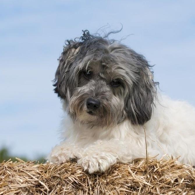Opciones antiparasitarias para nuestra mascota
