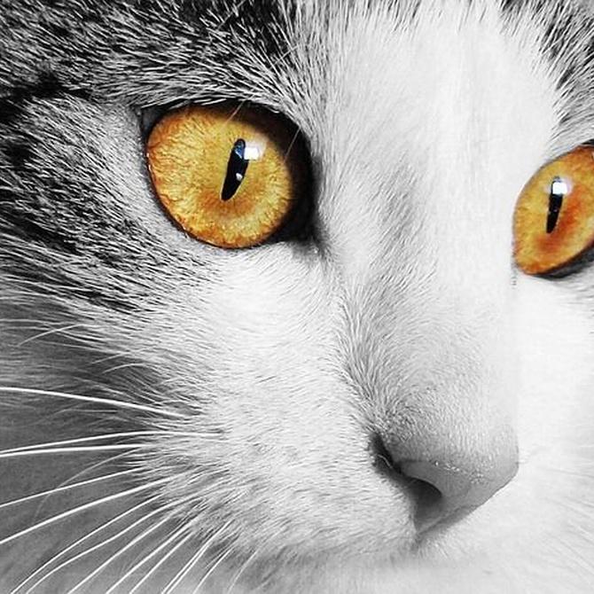 ¿Es recomendable ponerle un collar al gato?
