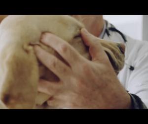 Veterinario 24 h en Barajas, Madrid |  Clínica veterinaria Plutos