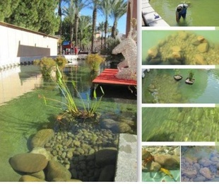 Beneficios para los estanques públicos