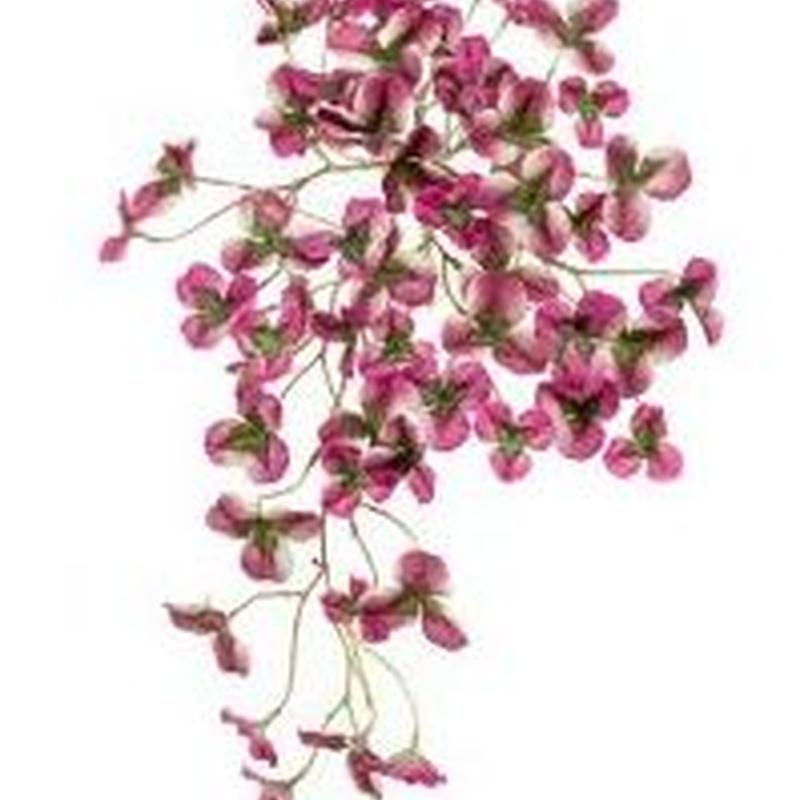 Arbusto colgante Oxalis Violeta: ¿Qué hacemos? de Ches Pa, S.L.
