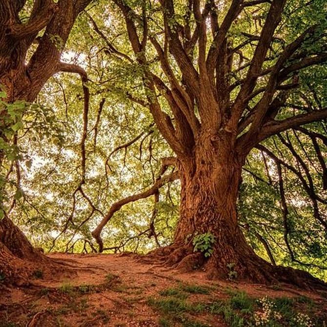 La madera: nobleza y sencillez