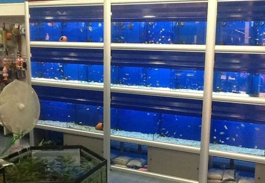 La grava para el acuario
