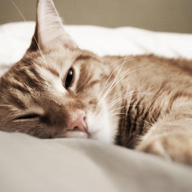 El problema de la insuficiencia renal en los gatos