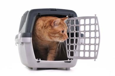 Cómo meter al gato en el transportín