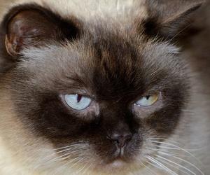 Pautas para cuidado e higiene de tu gato