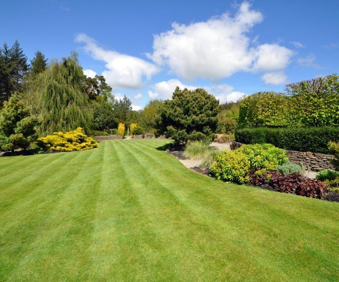 Plantas de Exterior: Productos y Servicios de El Jardín de tu Casa