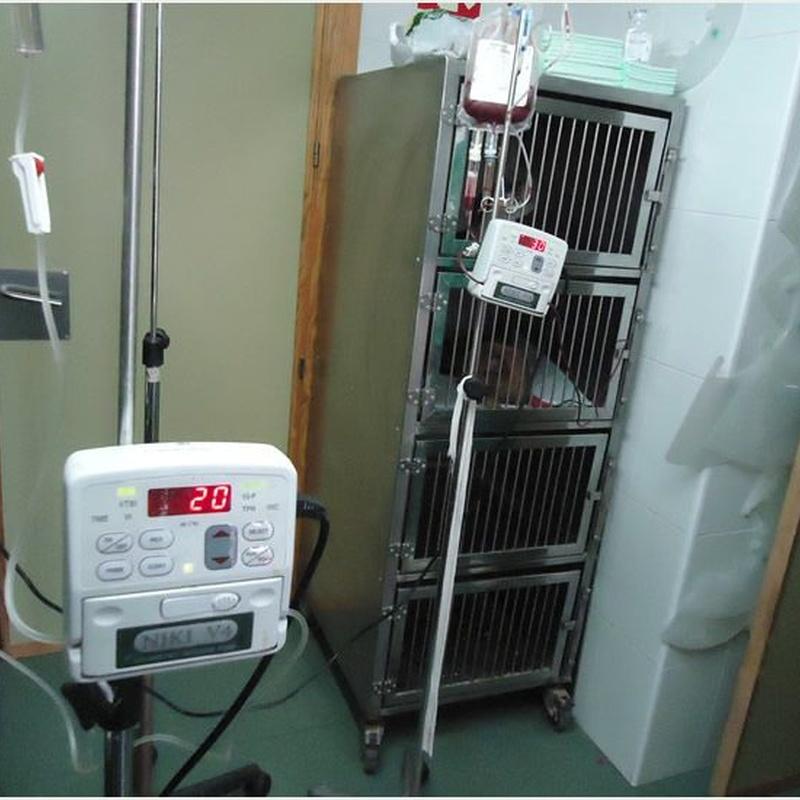 Urgencias 24 horas: Servicios de Clínica principal Veterinaria Puerto Mazarrón