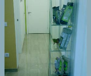 Galería de Veterinarios en Valencia | Clínica Veterinaria Selvätica