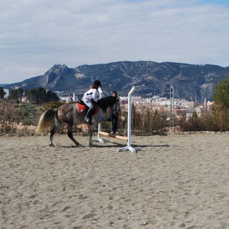 Cursos: Servicios de Equitación Peluca