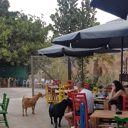 Recommended Guachinches in Tenerife | La Cueva de Chichio