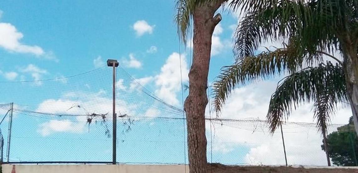 Podas en altura en Huelva