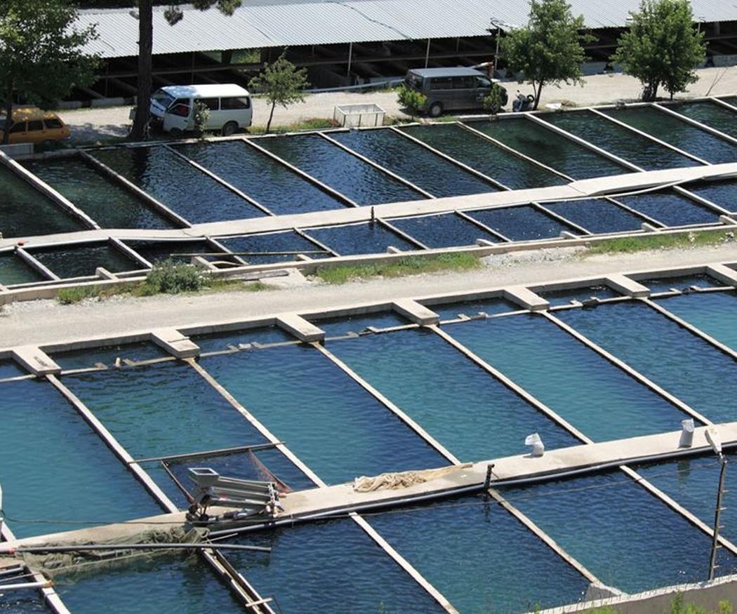 El agua de las piscifactorías