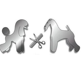 Venta de Acuarios: Nuestros trabajos de Animals Ca la Ruth