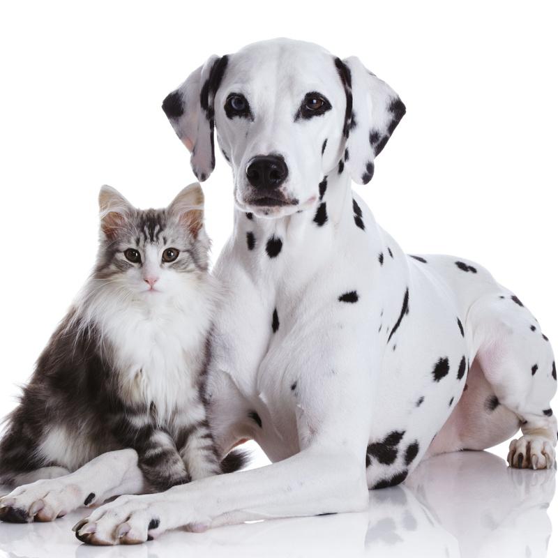 Comunicación animal: Servicios de El Ca Rosa
