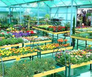 Plantas de exterior Madrid