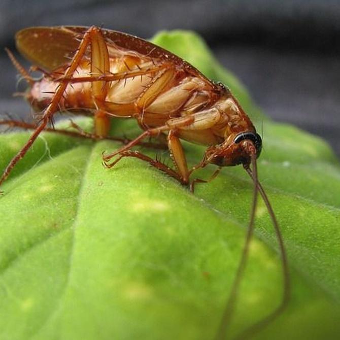 Consejos para eliminar las cucarachas