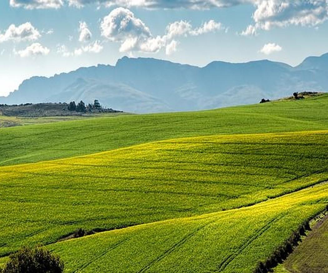 Beneficios de la agricultura ecológica