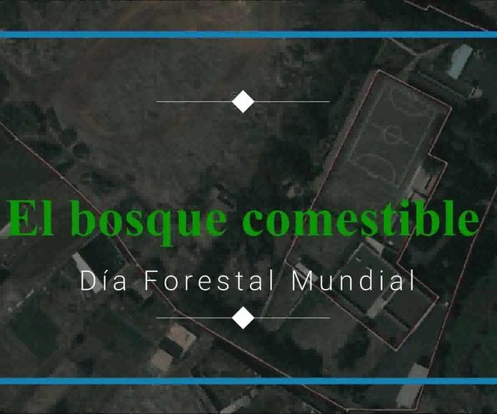 Informe 2017 del Proyecto Productivo y Cosmestible Ecooasis: Proyectos y Servicios de Asociación Domitila