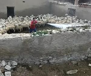 Limpieza y desinfección de explotaciones ovinas