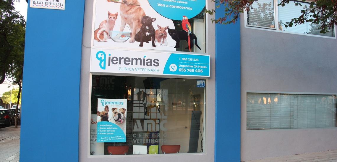 Veterinario de urgencias en Alicante para operaciones y medicina interna