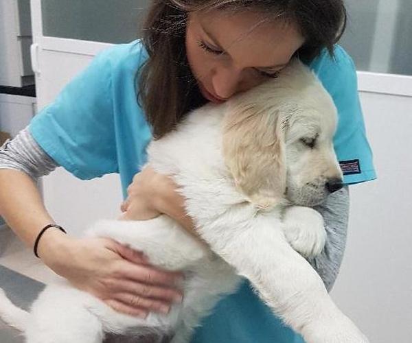 Clinicas veterinarias Torrejón de Ardoz