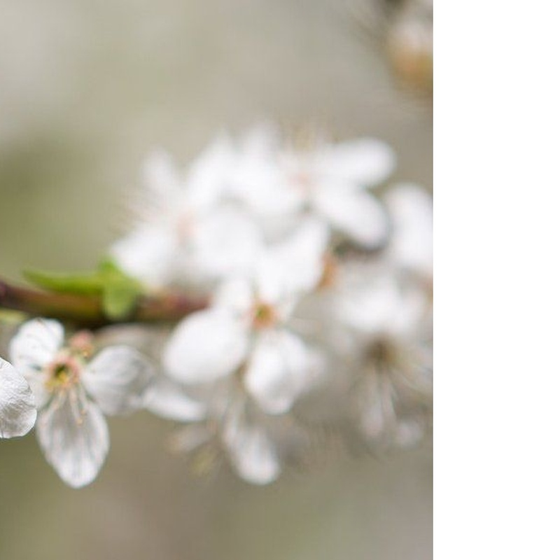 Anillos de compromiso: Nuestras Joyas de Joyería Zafiros