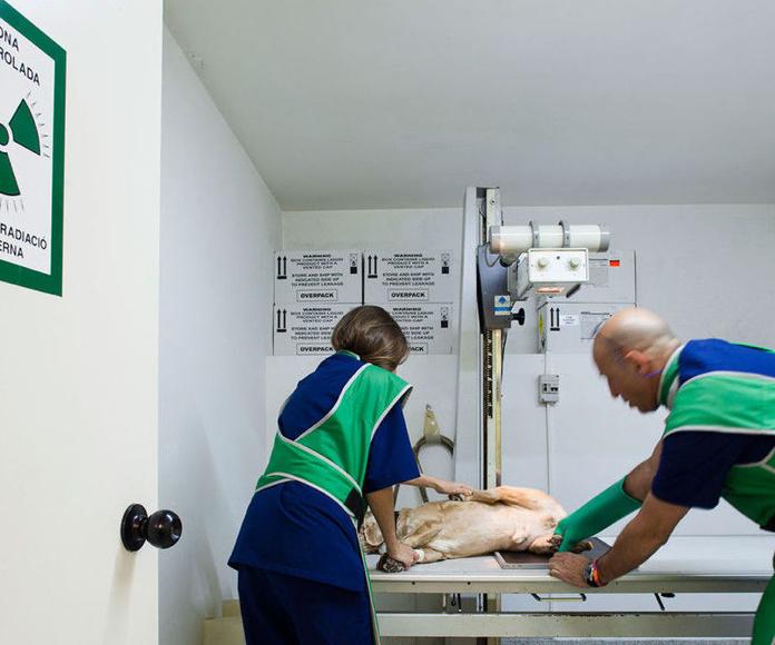 Radiología: Especialidades de Hospital Veterinario Desvern