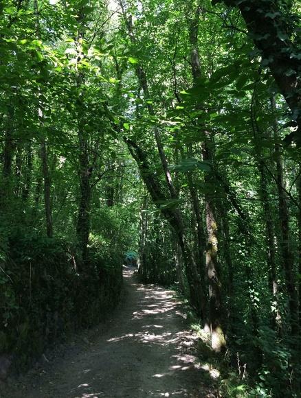 Bosque de castaño