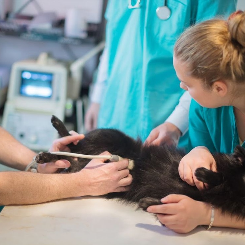 Diagnòstic per imatge: Serveis especialitzats de Arca Veterinaria