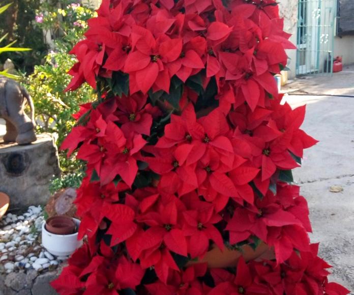 Horario de Navidad EL VIVERO DE MARUJA Cartagena