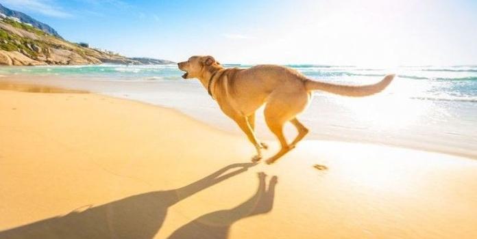 Playas para perros en España.