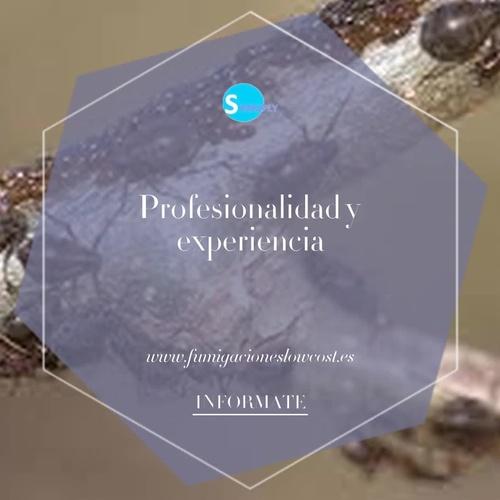 Desinfección de cucarachas en  Barceloneta, Barcelona, con profesionalidad